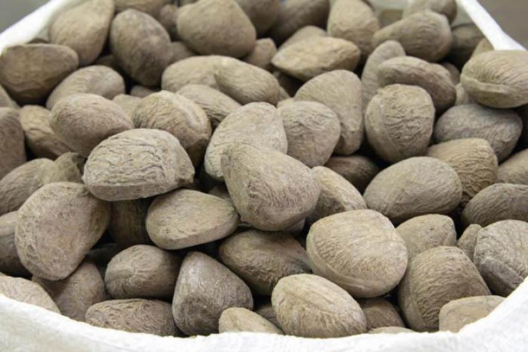 میوه pangium edule