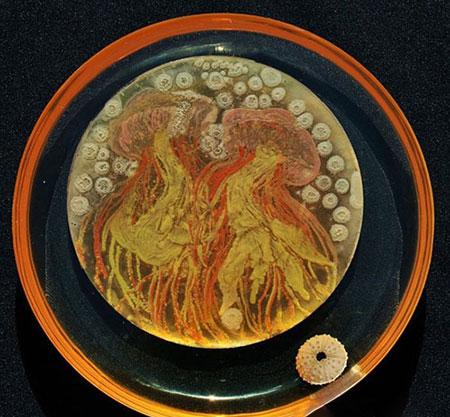عکس های زیباترین میکروب های جهان!