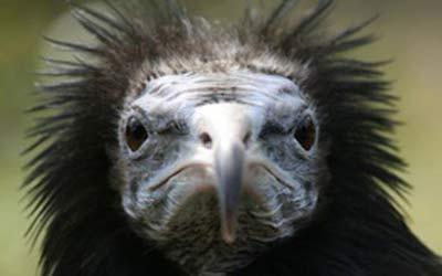 اسید معده این پرنده فلزات و سنگ را هم ذوب می کند!