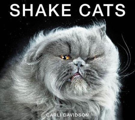 عکس های مسخره ترین و خنده دارترین گربه ها