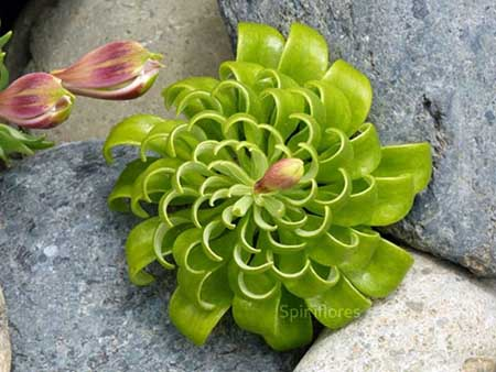 عکس گل های زیبا با اشکال زیبای هندسی