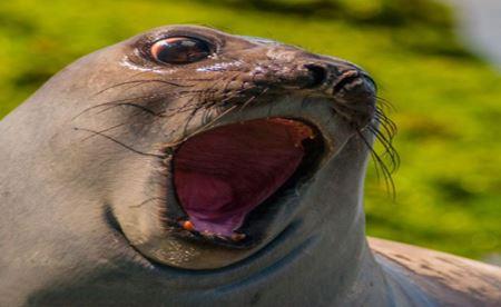 عکس های جالب و خنده دار از چهره حیوانات متعجب!