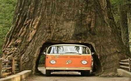 اخبار , اخبار گوناگون , تونل درختی