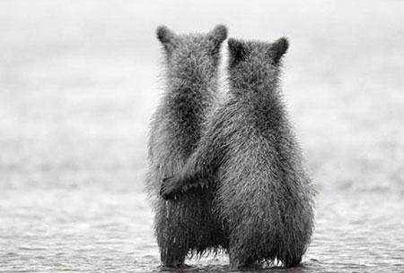 عکس های جالب و حیرت انگیز حیوانات دوقلو