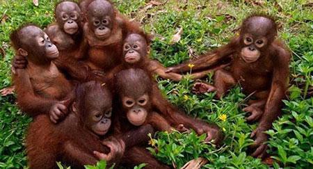 عکس های جالب خانوادگی حیوانات