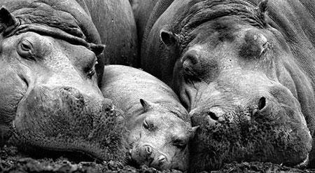 خانوادگی حیوانات (3)