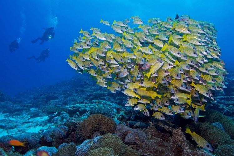 غواصی مالدیو