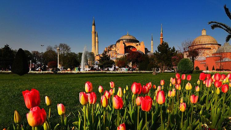 گل لاله در ترکیه