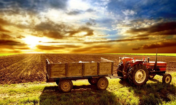 کشاورزی در ترکیه