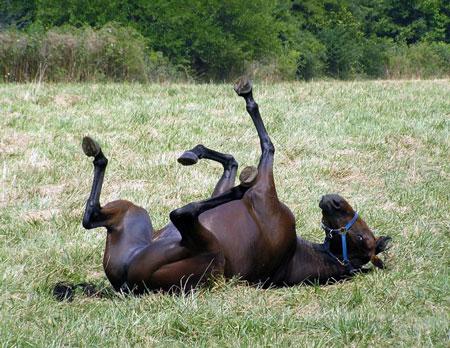آمار عجیب تجاوز جنسی به اسب در سوئیس!