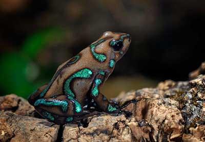 عکس های بسیار زیبا از حیوانات رنگی