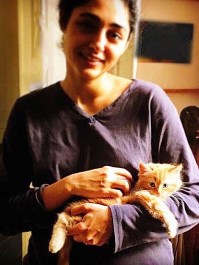 گربه خانگی گلشیفته فراهانی