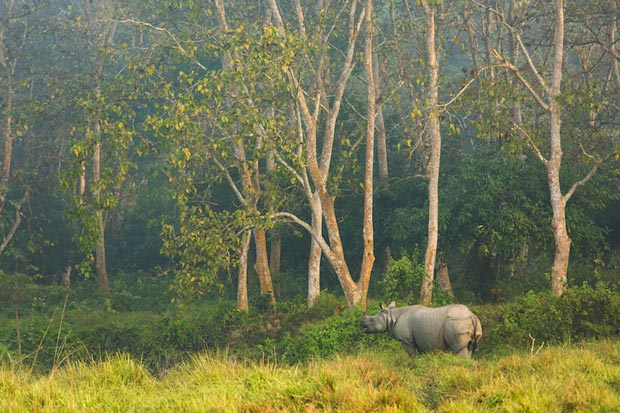 پارک ملی چیتوان-Chitwan-National-Park