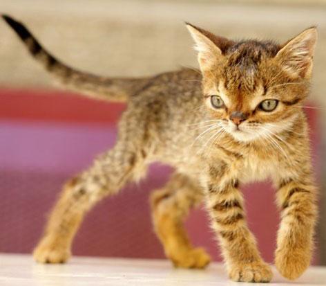 عکس های جالب گربه ای که دارای سندروم داون است!