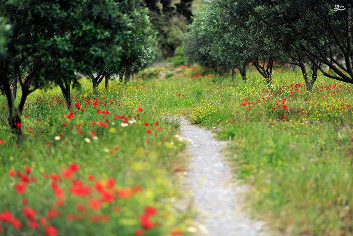 عکس های زیبا و دیدنی کشور یونان