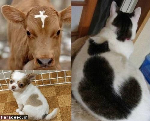 در حیوانات