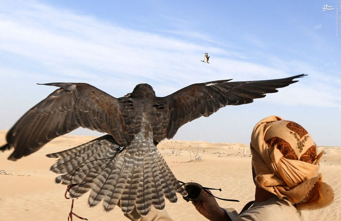 تفریح لوکس عرب ها در بیابان های امارات! +تصاویر