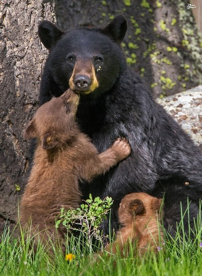 تصاویر جالب عاشقانه میان حیوانات