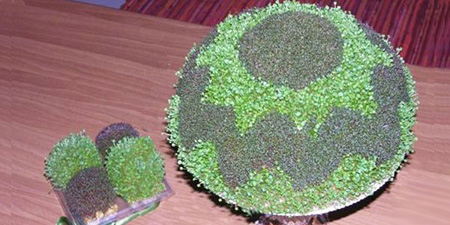 سبزه دو رنگ