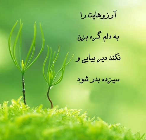 Photo of جملات مخصوص سیزده بدر + متن های عاشقانه و غمگین درباره سیزده بدر