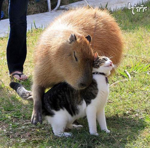 حیوانات عاشق این نوع حیوان جالب هستند