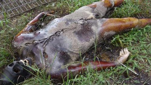 عکس های وحشتناک تجزیه جسد انسان پس از مرگ (18+)