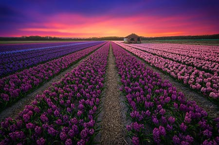 عکس های زیبا و خارق العاده از کشور هلند