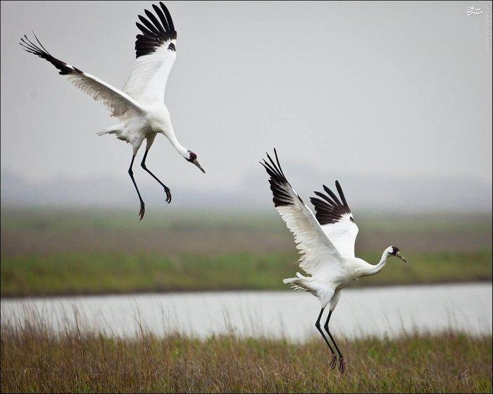 تصاویر انرژی بخش حیات وحش