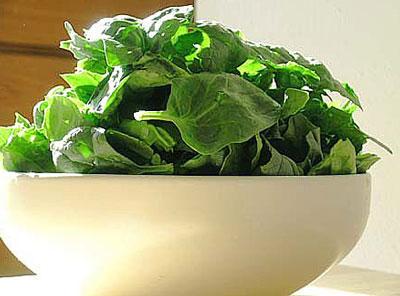 گیاهان عضله ساز