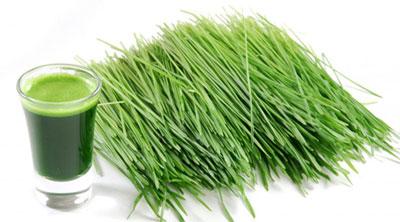 سبزه ی گندم و جو