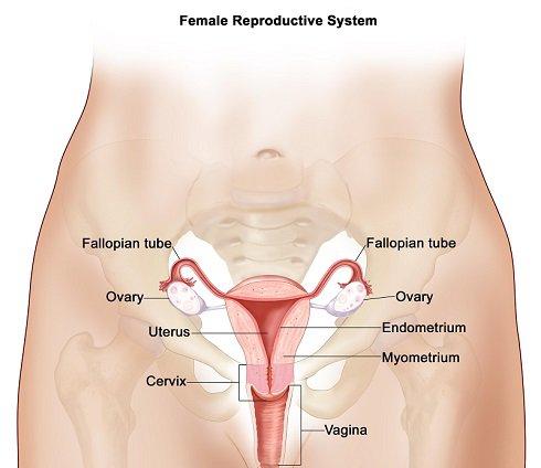 uteras-system.jpg