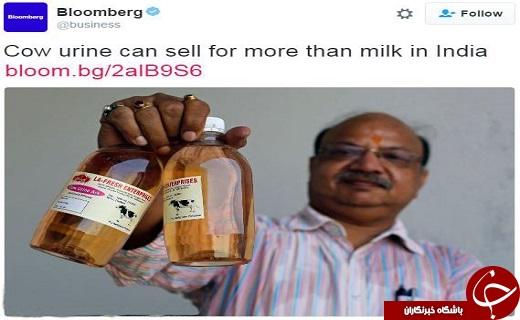 فروش ادرار گاو در شیشه در هند! (عکس)