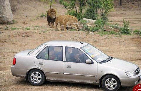عاقبت وحشتناک دعوای زن و شوهر در باغ وحش! عکس