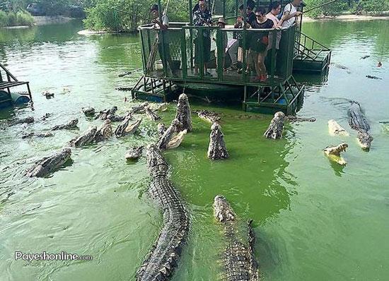 عکس های جاذبه گردشگری عجیب و هیجان انگیز در چین