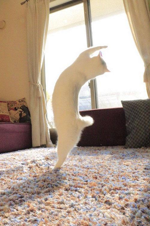 عکس های جالب و خنده دار گربه رقاص!