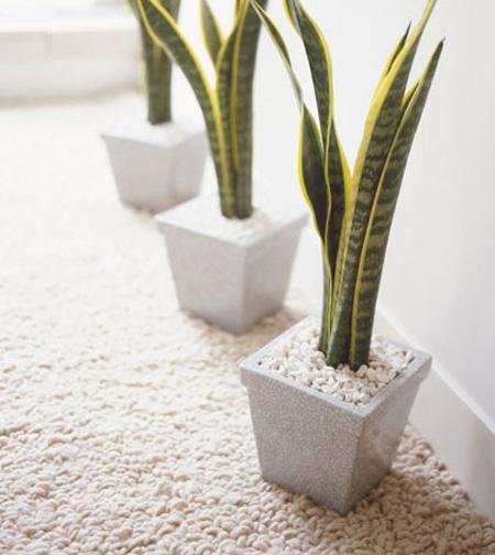 برای تصفیه هوای منزل از چه گیاهانی در خانه قرار دهیم؟