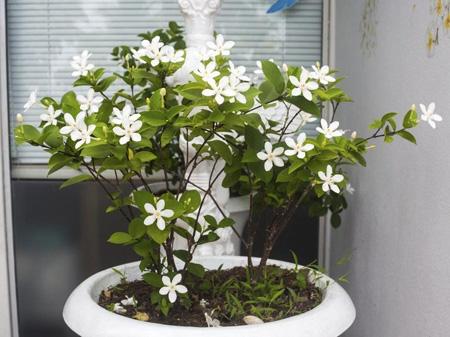 Photo of برای تصفیه هوای منزل از چه گیاهانی در خانه قرار دهیم؟