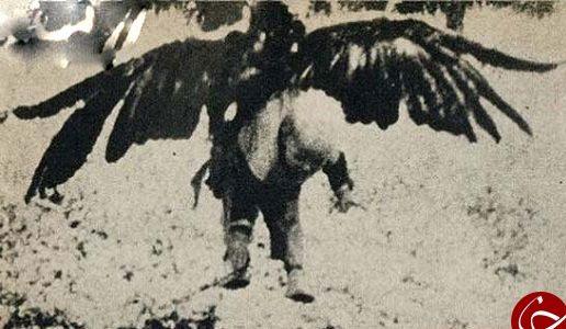 عکس هایی از پسر بچه که توسط عقاب بزرگ شکار شد!