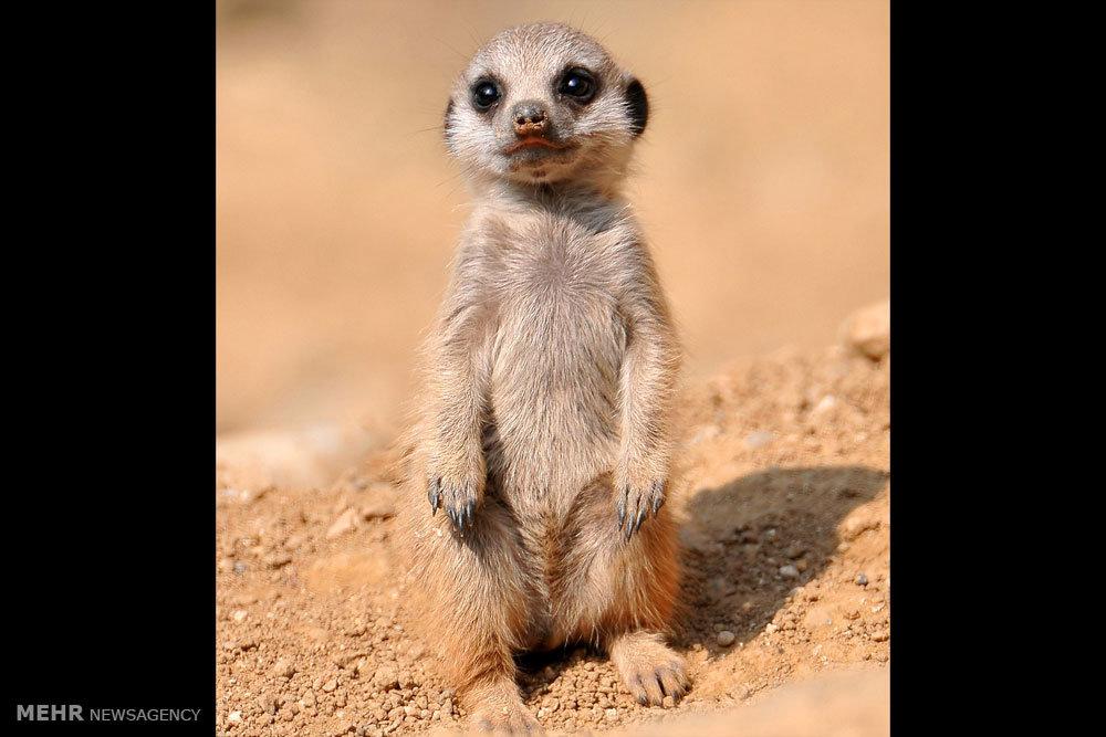 جالب ترین عکس های بچه های حیوانات مختلف
