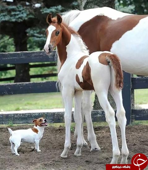 عکس های جالب حیوانات غیر هم نوع که شبیه هستند!