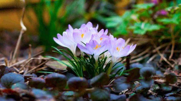 تصویر از عکس پروفایل زیباترین گل های جهان + متن گل رز عاشقانه