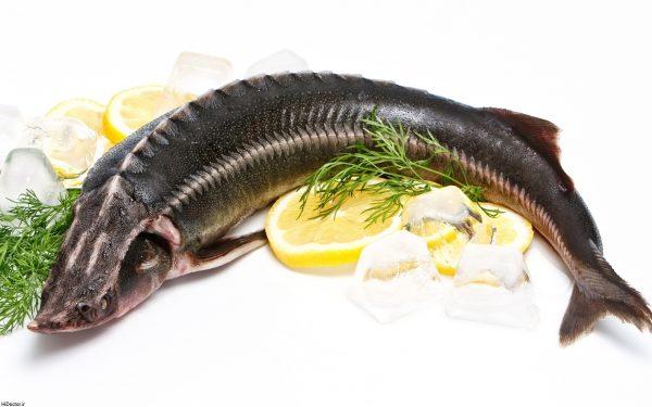 Photo of مضرات ماهی خوردن و فواید ماهی خوردن + از تنظیم فشار خون تا پیشگیری از چین و چروک با ماهی
