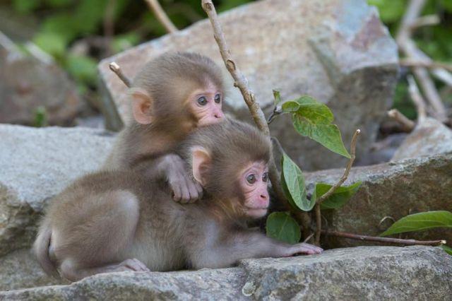 Photo of تصاویر زیبا و دیدنی از دنیای حیوانات