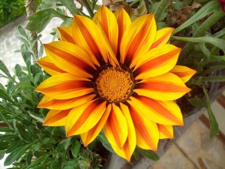 گیاهان و گل های زینتی که باعث مسمومیت شما می شوند!