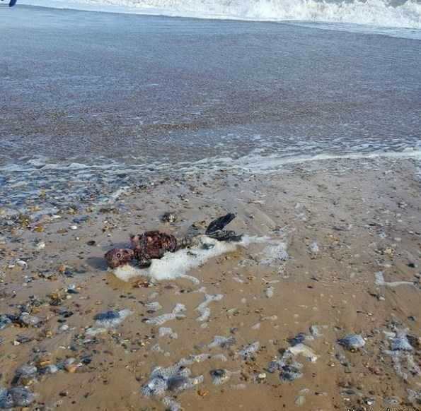 جسد پری دریایی