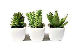نحوه نگهداری از گیاه کاکتوس در خانه
