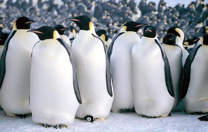 فیلم March of the Penguins