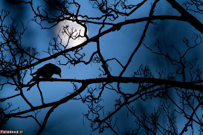 ماه و درخت، برنده جایزه بخش جوان. عکاس: گیدئون نایت