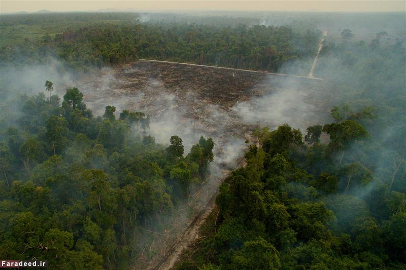 """مسیر نابودی؛ تصویری از آتش سوزی در جنگل های """"بورنئو"""" اندونزی محل زندگی اورانگوتان ها. عکاس: تیم لامان"""