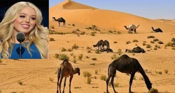 شاعر اردنی عرب از دختر زیبای دونالد ترامپ خواستگاری کرد و شرط گذاشت!